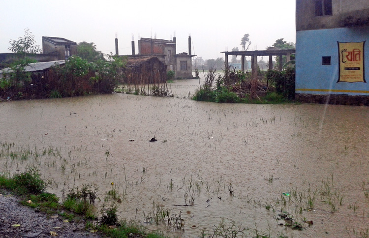 An inundated settlement in Dhangadi municipality, Kailali, on Tuesday. Many settlements in the area face this risk every monsoon due to lack of proper drainage. Photo: THT