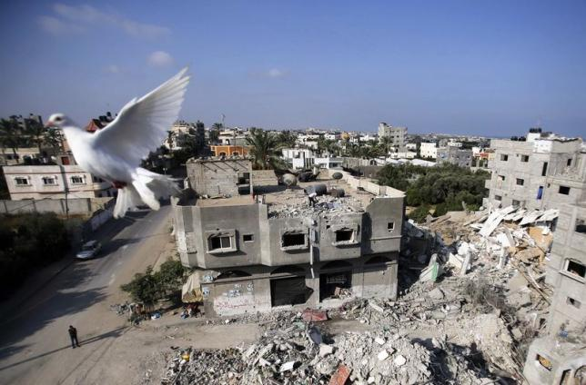 A Pigeon flies near the remains of a house, which witnesses said was destroyed by an Israeli air strike, in the central Gaza Strip August 23, 2014. REUTERS/Ibraheem Abu Mustafa