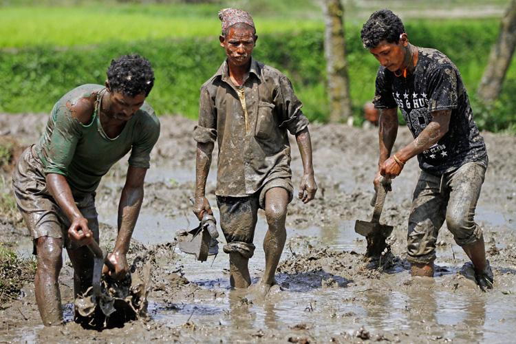 Farmers preparing a field to plant paddy in Jitpurphedi. Photo: Skanda Gautam/ THT