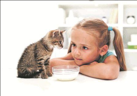 Me and my cat - little girl and her new kitten getting to know e