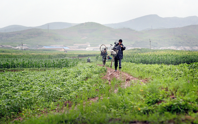 People carrying their bicycles through farm fields, in Pyongsong,  on Saturday. North Korea may be facing a poor harvest and possible food shortages due to unusually light rainfall in some parts of the country this year. Photo: AP