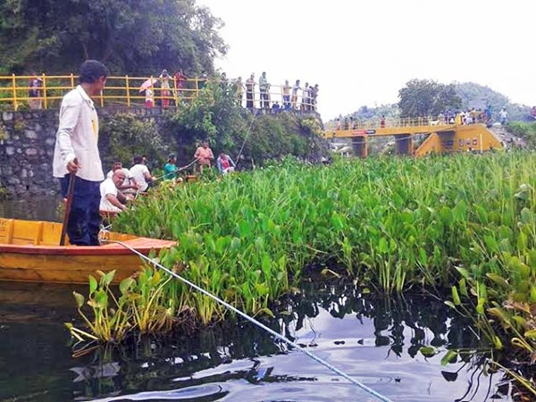 Locals removing water hyacinth from the Begnas Lake in Kaski on Friday, July 24, 2015. Photo: Rup Narayan Dhakal