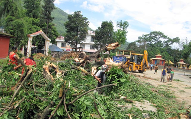 Trees being removed as part of a road expansion drive in Tanahun on Saturday. In Damauli Bazaar area too, cart vendors have been removed to ease traffic. Photo: THT