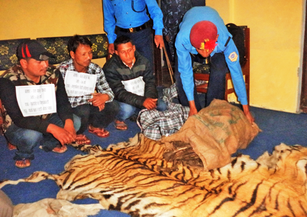 This file photo shows police making public people narrested with tiger skin in  the far-west Regional Police Office, Dipayal.  PhotoL: THT
