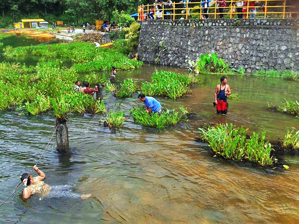 Locals removing water hyacinth from Begnas Lake, in Lekhnath Municipality, Kaski, on Friday. nPhoto:THT