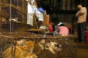 Cats are seen in cages for sale at a meat market in Guangzhou, in southern China.  Source: AFP