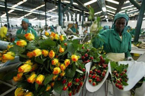Kenya, the biggest economy of the bloc, Does a huge business exporting flowers Source: AFP