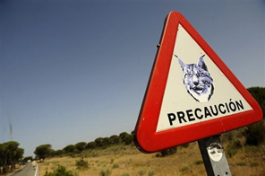 A road sign warning to watch out for lynxes at the Donana National Park Source: AFP