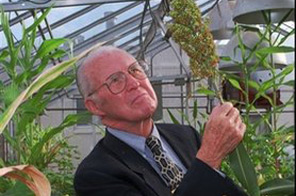 File - Norman Borlaug, visiting professor at Texas A&M University, and the 1970 Nobel Prize recipient, looks over some sorghum tests in this Oct. 30, 1996 file photo taken in one of A&M's teaching greenhouses, in College Station, Texas. The Nobel Prize-winning agricultural scientist has died in Texas at age 95. Source: AP