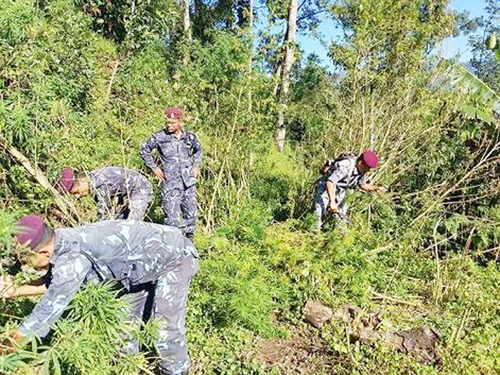 Personnel from Dilpa Area Police Office destroying saplings of marijuana in Annapurna VDC in Bhojpur district on Thursday, October 8, 2015.n Photo: Niroj Koirala