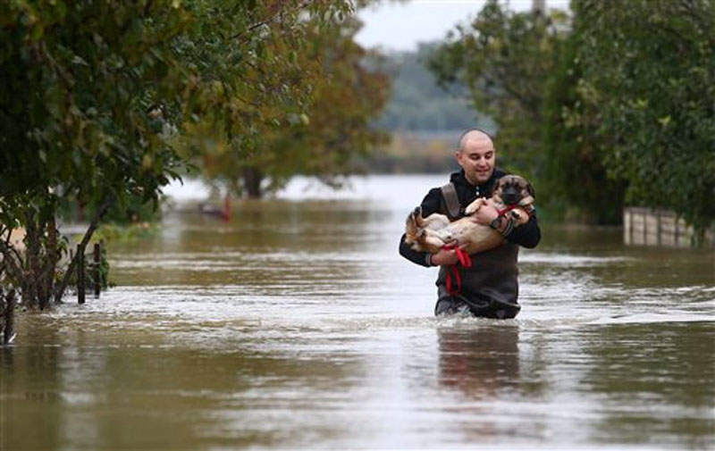 A rescuer carries a dog through a flooded street in Karlovac, western Croatia, Friday, October 16, 2015. Photo: AP