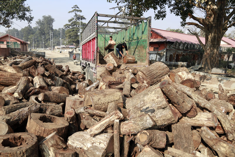 Nepal Timber Corporation, collecting firewood at Pashupatinath in Kathmandu after the acute shortage of fuel in the country on Saturday, December 12, 2015. Photo: RSS