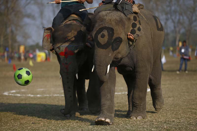 FILE - Elephants at the elephant festival in Sauhara, Chitwan. Photo: Skanda Gautam/THT