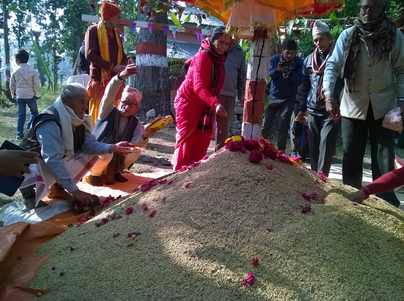 Locals worship a heap of paddy on the occasion of Dhanya Purnima, in Bharatpur Sub-Metropolitan City-21 of Chitwan district, on Friday, December 25, 2015. Photo: Tilak Ram Rimal