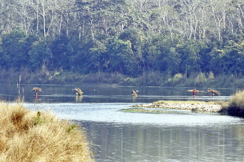 Locals of Patayani crossing the Rapti River after collecting firewood from the Chitwan National Park on Friday, January 1, 2016. Photo: RSS