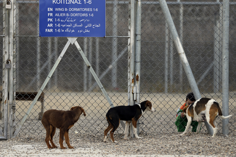 Child feeds stray dogs at a migrant transit camp outside the Greek town of Orestiada, near the Greek-Turkish border on Friday, January 22, 2016. Photo: AP