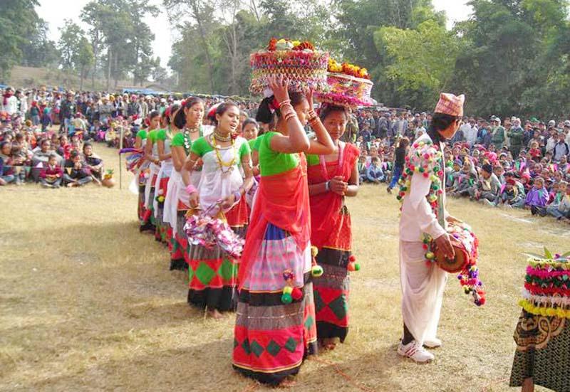 Tharu girls performing Shakiya Naach during Maghi celebrations in Bhada, a Tharu Homestay Village in Kailali, on Saturday, January 14, 2017. Photo: THT