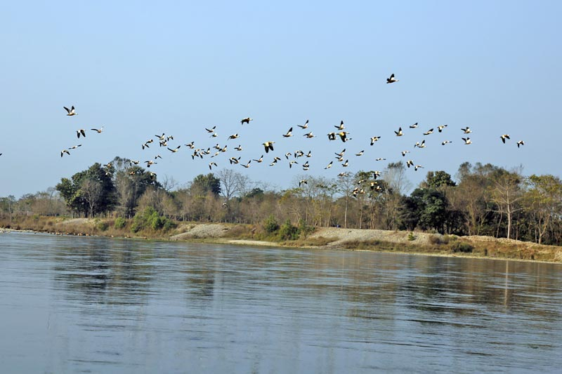 Birds flying above the Rapti River in the Chitwan National Park in Chitwan district, on Tuesday, January 05, 2016. Photo RSS