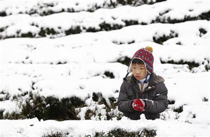 A young boy enjoys the light snowfall on a tea plantation in the Pinglin mountain area of New Taipei City, Taiwan, Monday, Jan. 25, 2016. Photo: AP