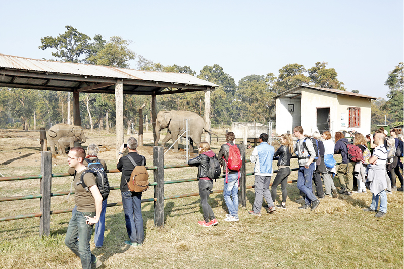 Tourists observe elephants at a breeding centre in Kasahara of Chitwan district on Friday, January 1, 2016. Photo: RSS