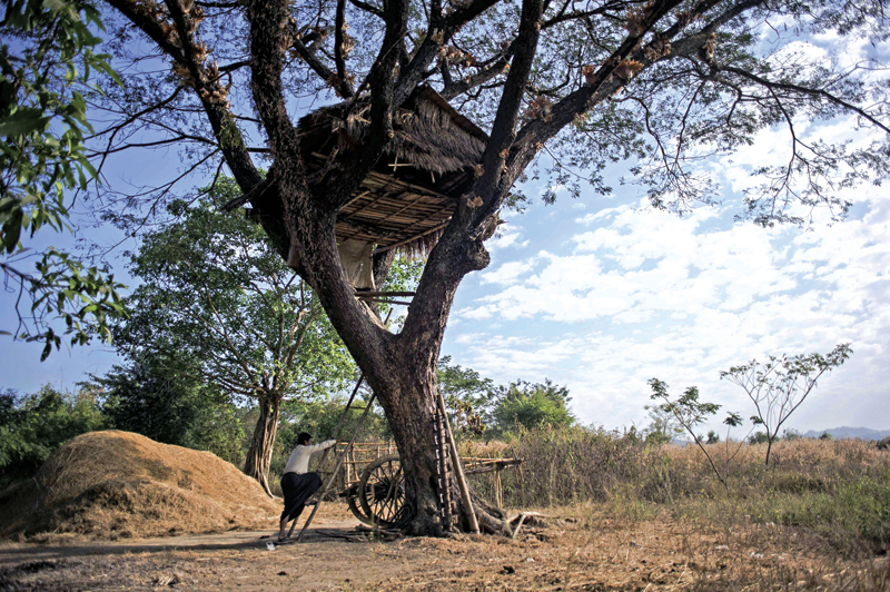 A man climbing up to a tree house in Taik Kyi village on the outskirts of Yangon, as elephants often come rampaging to the village in search for food. Photo: AFP