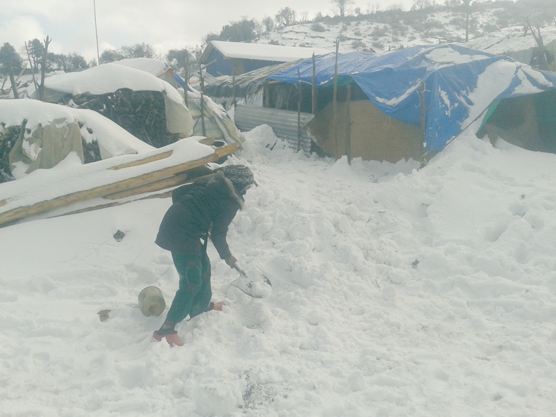 A woman in Gunsipakha of Laprak village in Gorkha district removes snow blocks off her way on Monday, January 11, 2015. The snowfall had buried some temporary shelters of quake survivors in the village. Photo: RSS