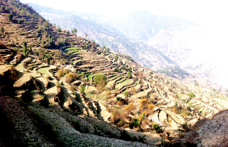 A view of the barren land caused by the prolonged drought, in Ganeshpur VDC, Dadeldhura, on Wednesday, February 24, 2016. Photo: THT