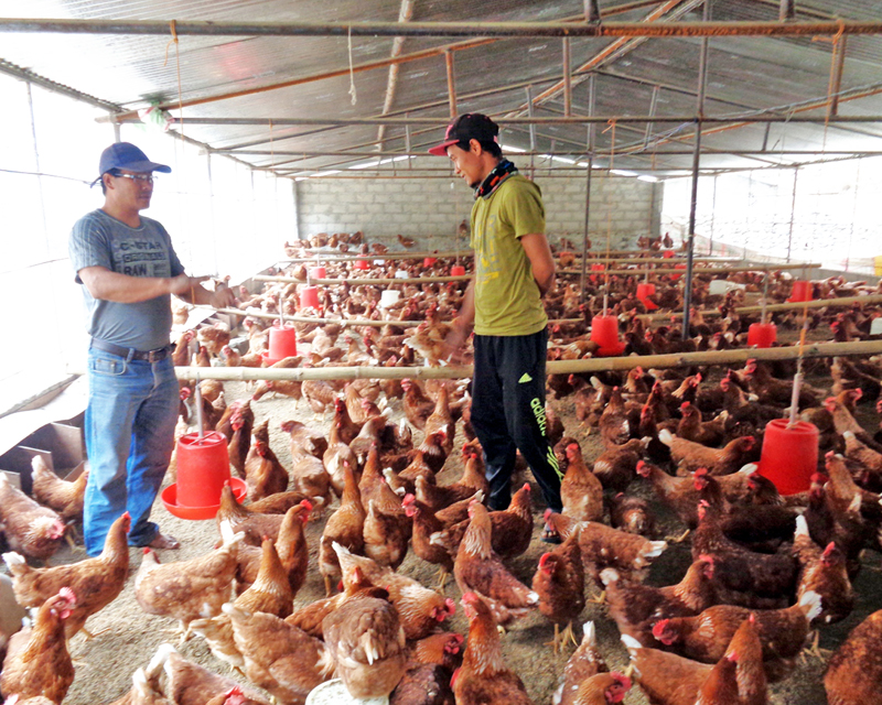 Local youth engaged in poultry business for economic prosperity in Bhurung Tatopani VDC of Myagdi district on Friday, February 26, 2016. Photo: RSS