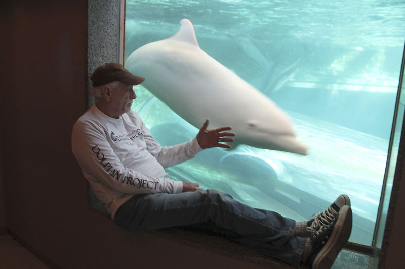Ric O'Barry checks the status of Angel the dolphin at the Taiji Whale Museum in Taiji, Wakayama prefecture, western Japan, on September 16, 2015. Photo: DolphinProject.com via AP