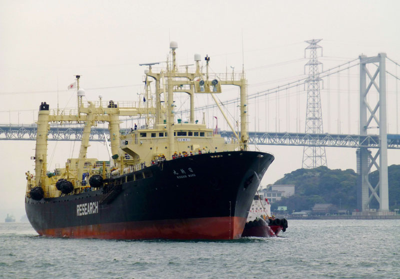 FILE - Japanese whaling vessel Nisshin Maru returns to a port, from the Antarctic Sea, in Shimonoseki, western Japan, on April 5, 2014. Photo: AP