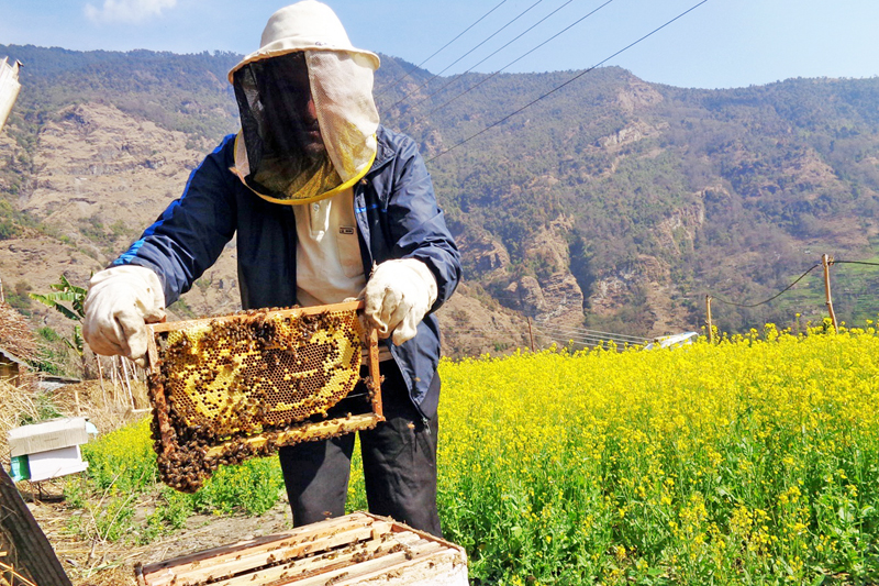 An apiculturist working in his farm in Kuhun of Myagdi district on Wednesday, March 9, 2016. Photo: RSS