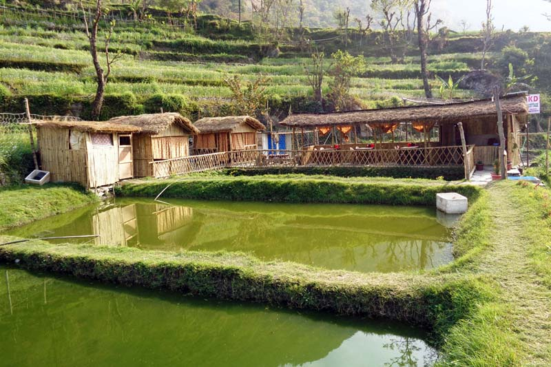Youth of Simalchaur running a fish farm at the KD Agro Farm with the help of internet in Myagdi. Photo: RSS