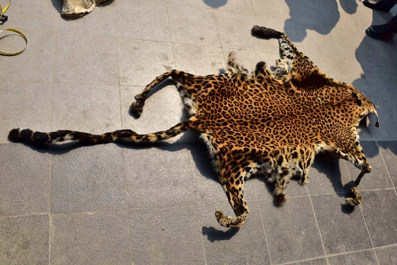 Police making public the leopard hide public they confiscated from Dhrub Rai, in Kathmandu, on Thursday, March 24, 2016. Photo: MCPD