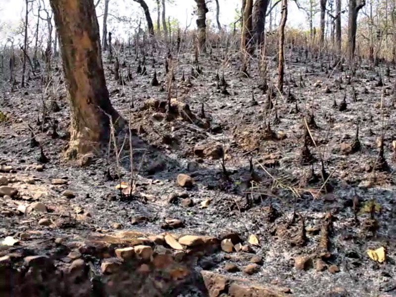 A view of burnt trees after a wildfire in Mahabharat Community Forest, in Hariya VDC, Udayapur, on Saturday, March 26, 2016. Photo: THT