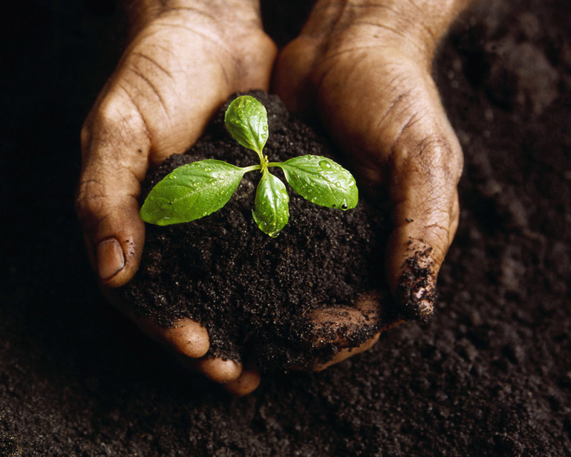 Hands Holding a Seedling and Soil. Photo: squarespace.comc