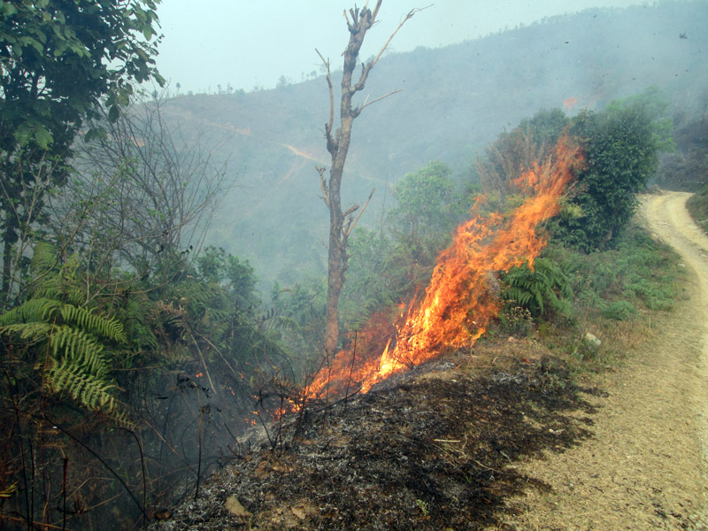 A wildfire spreading in Jumdanda Community Forest of Bandipur, Tanahun, on Friday. Photo: THT