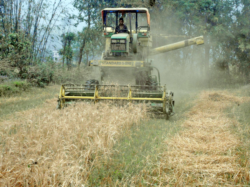 A machine being used to harvest wheat in Jutpani of Chitwan district on Thursday, April 24, 2016. Photo: RSS