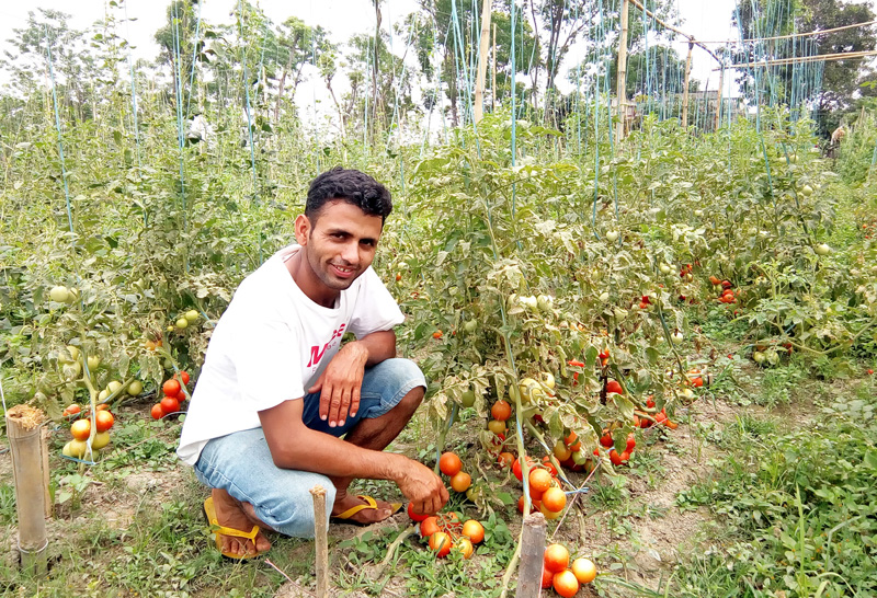 A Nawalparsi youth, who returned from Isreal after spending 11 months in an agricultural farm, has been engaged in commercial agricultural farming in the district. The picture is taken on Wednesday, April 20, 2016. Photo: RSS