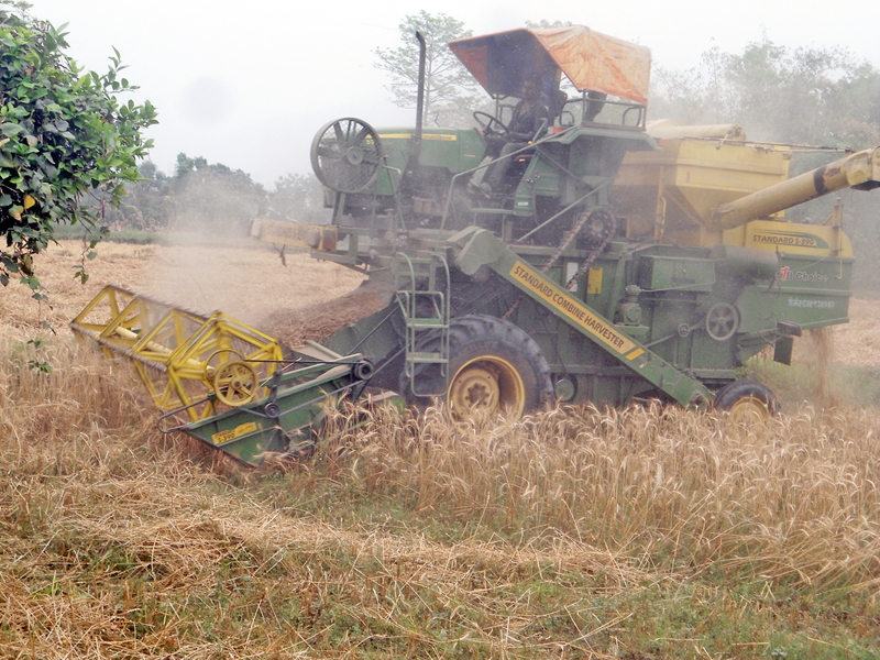 A machine is being used to harvest wheat crops in Jutpani of Chitwan district on Thursday, April 24, 2016. Photo: RSS