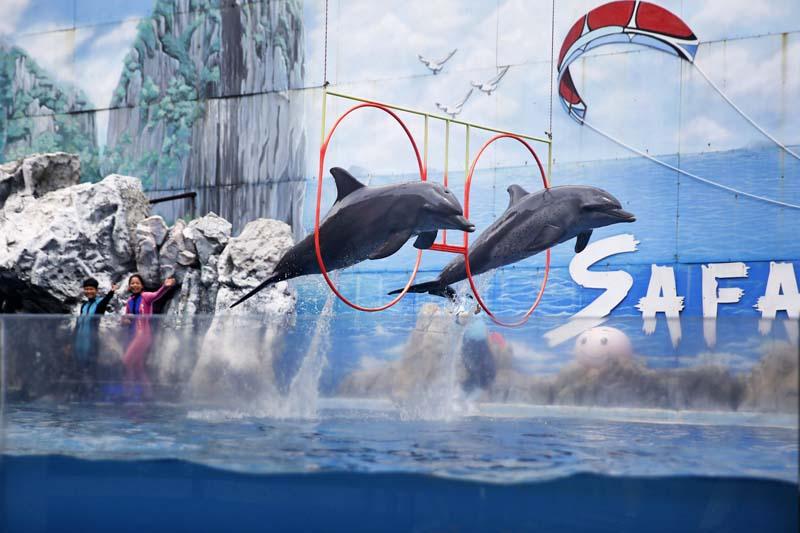 Dolphins jump through loops to entertain people inside the Safari World in Bangkok, Thailand on Sunday, May 22, 2016. Photo: Skanda Gautam/ THT