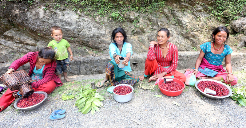 Local women selling Kafal (bay-berries) at a road side leading to Daman of Makawanpur district, on Tuesday, May 17, 2016. Photo: RSS