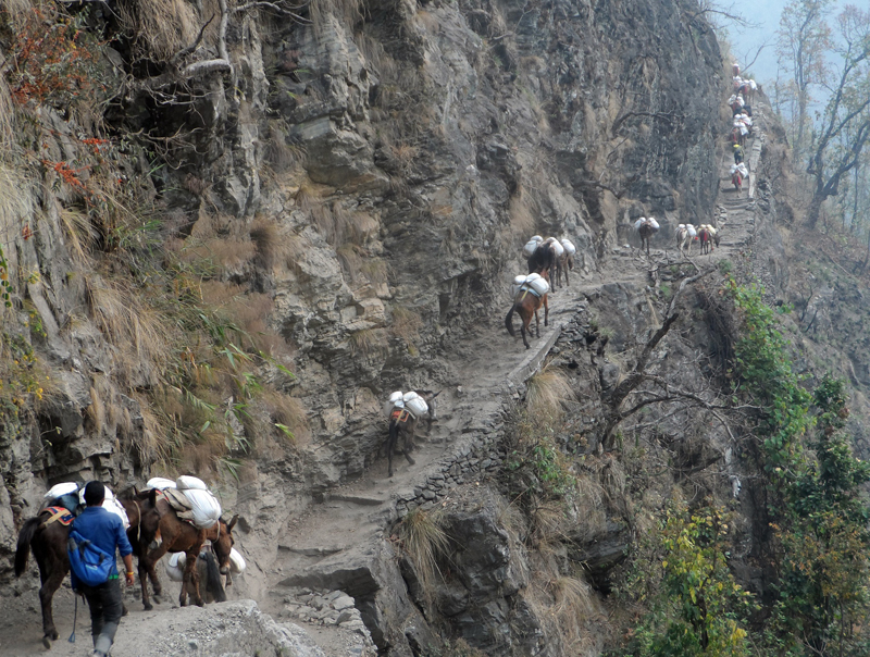 Mules are being used to transport goods in the eastern part of Gorkha district on Monday, May 2, 2016. Photo: RSS