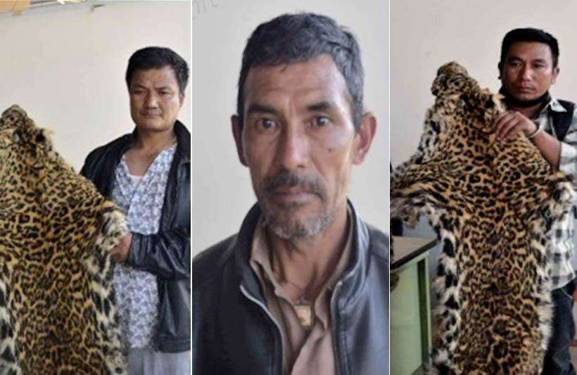 (From left) Sundar Rai (40), Nakkal Bahadur Bal (52) and Shamsher Chhimi Tamang (37). The trio were held in possession of two leopard hides from Bungamati of Lalitpur on Sunday, May 22, 2016. Photos: MCPD