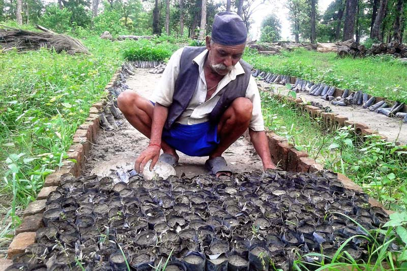 An elderly man fills plastic pots to grow plants in a nursery at the community forest of Bani, in Krishnapur Municipaity-2 of Kanchanpur district, on Monday, July 18, 2016. Photo: RSS