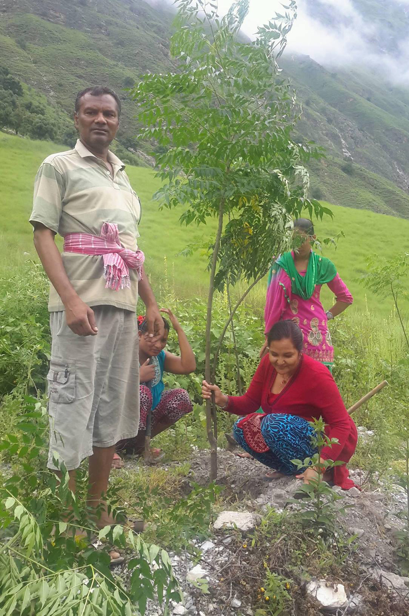 Staffers of Kolti Primary Health Centre planting trees to prevent landslides in the surroundings of the health centre, in Kolti VDC, Bajura, on Wednesday, August 17, 2016. Photo: THT
