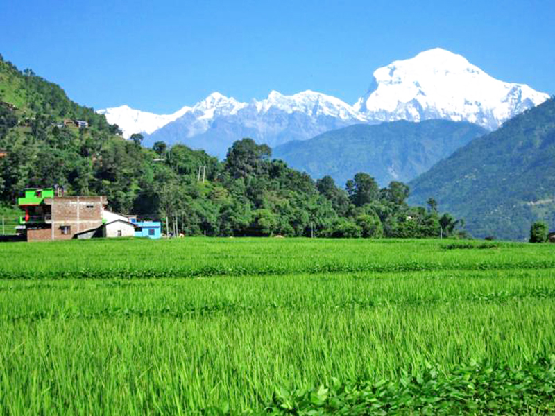 A spectacular view of green lushes of paddy field and Dhaulagiri Mountain range in the backdrop as seen from Ratnechaur of Beni Municipality in Myagdi district, on Wednesday, August 24, 2016. Photo: RSS