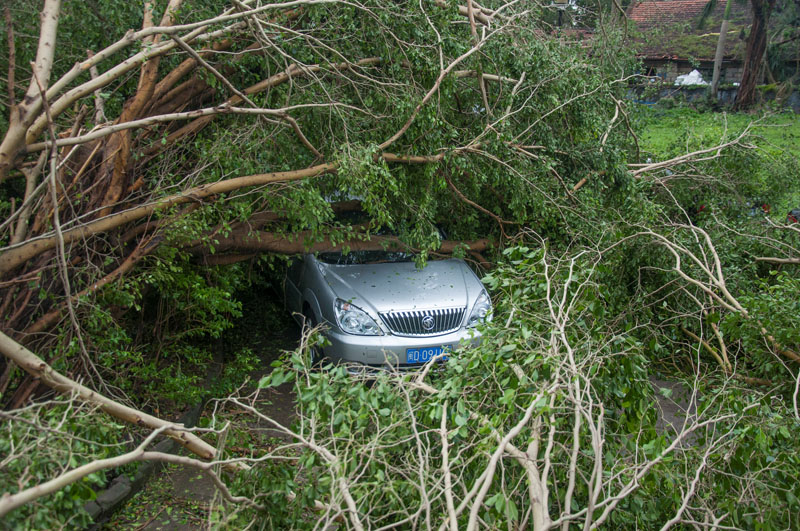 A car is seen under toppled trees after Typhoon Meranti swept through Xiamen, Fujian province, China, September 15, 2016. Photo: REUTERS