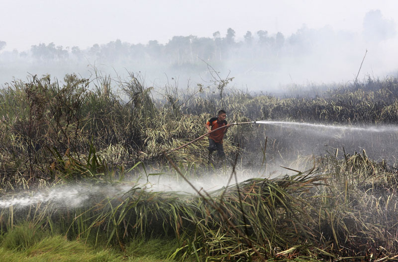 File - A fireman sprays water to extinguish wildfire on a peatland field in Ogan Ilir, South Sumatra, Indonesia, on Thursday, September 17, 2015. Photo: AP