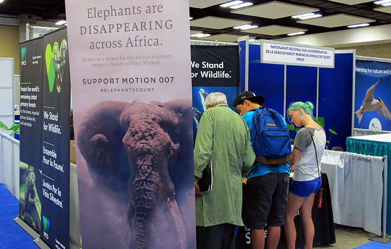 Conference attendees view a display of elephants and other wildlife at The International Union for Conservation of Nature World Conservation Congress in Honolulu on Friday, September 9, 2016. Photo: AP