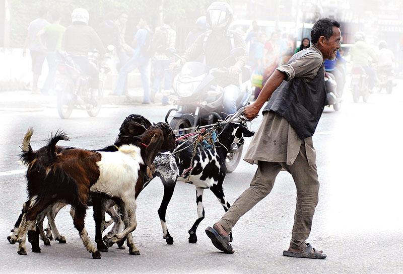 Photo: Bal Krishna Thapa Chhetri/THT